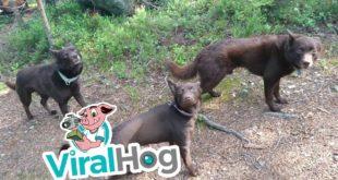 video dogs stay stunningly still