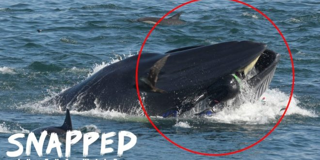 video man spat out by a whale te