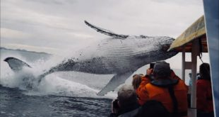 video whale jumps out of nowhere