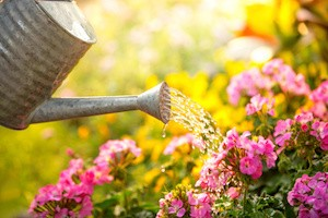 Watering flowers in garden centre
